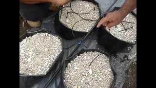 Sistema de Riego para Cultivo de Chile Habanero Hidropónico
