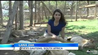 video South Africa Seeks to Ban Television Hunter From Countr