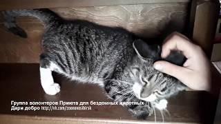 Котик без лапок просит чтобы его гладили Спасенные животные приюта Дари добро