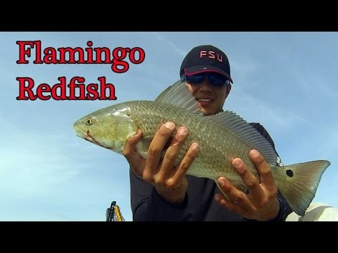kayak fishing in Flamingo for Redfish