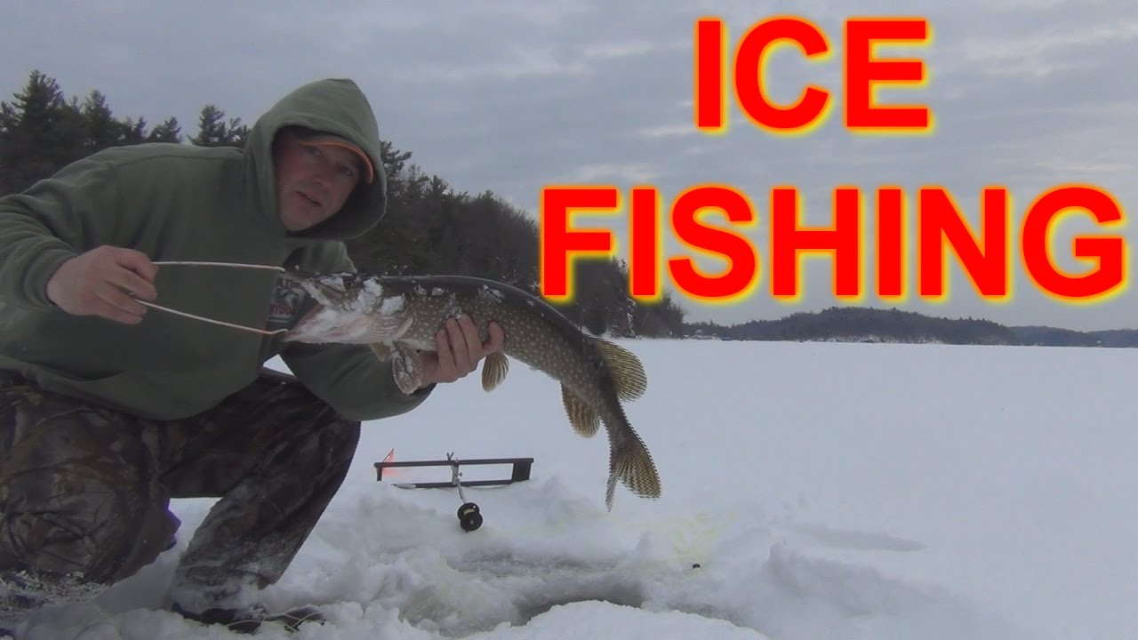 ICE FISHING FLAG AFTER FLAG  NORTHERN PIKE AND SOME PERCH   RED LAKE