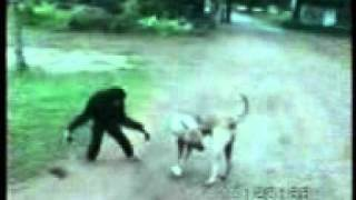 Dog Vs Monkey