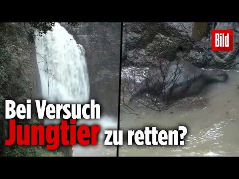Sechs Elefanten stürzen an Wasserfall ab und ertrinken