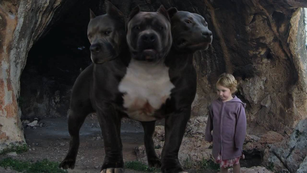 What Is The Name Of That Show Where Three Dogs