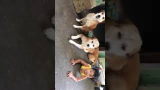 The family that stay together happy forever 😍🐕🐩🐶