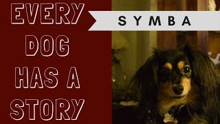 Every Dog Has a Story: Symba [THE FUREVER HOME FRIENDS]