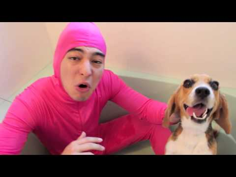 PINK GUY LOVES ANIMALS