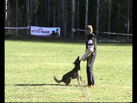 IPO FCI Qualification 2011 Finland, test dog