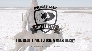 Best Time to Use a Deer Decoy • Mossy Oak University