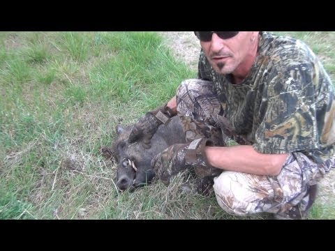 Hunting Texas Feral Hogs at Fence Line Crossings! Big Cutters! .223 @ 150 Yards