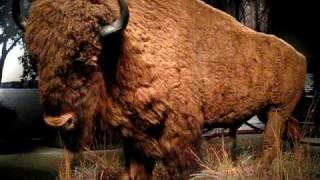 Ahh, bull crap.avi