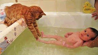 「かわいい猫」 笑わないようにしようとしてください - 最も面白い猫の映画 #287