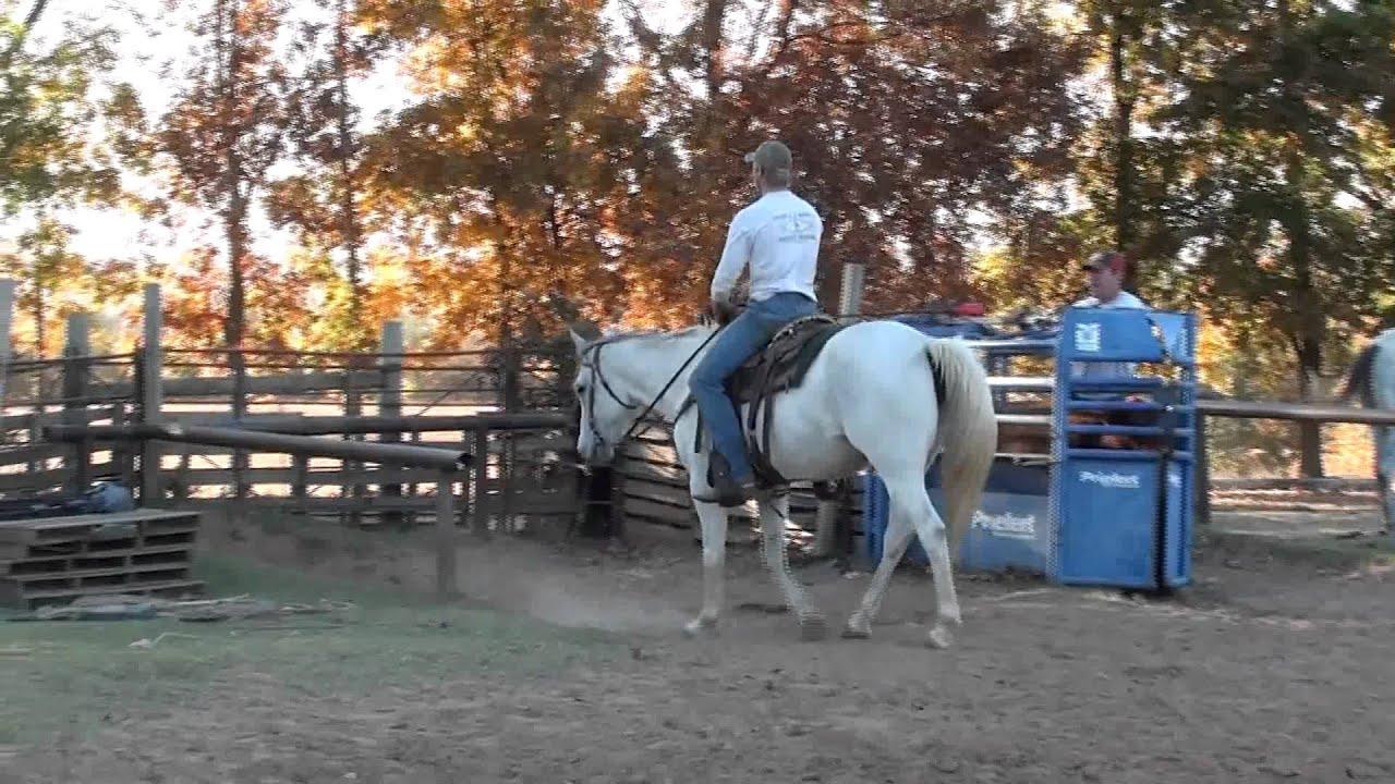 Kids horse for sale on craigslist youtube - Craigslist okaloosa farm and garden ...