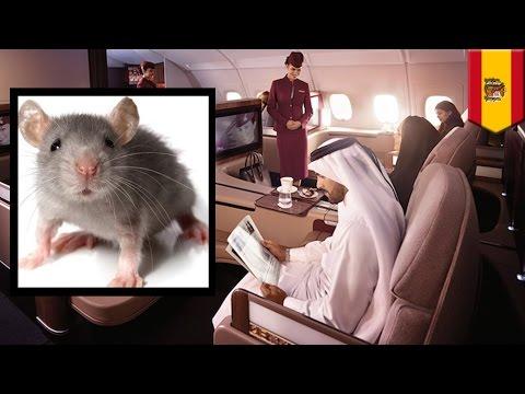 Vuelo de Qatar Airways se retrasa durante 6 horas por culpa de un pequeño ratón