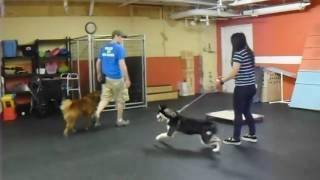 Dog Training | New Board & Train Dog | Solid K9 Training Dog Training