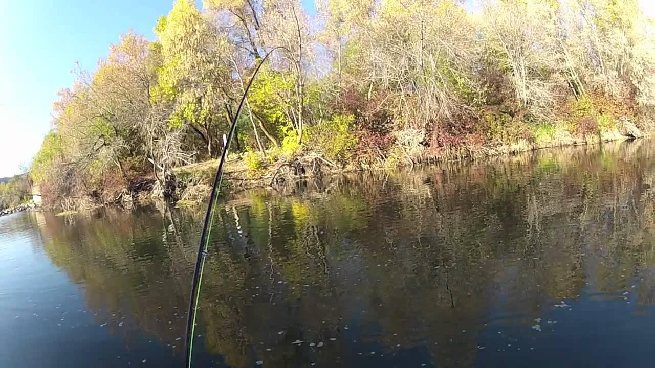 Weber river allen fly fishing youtube for Weber river fishing