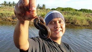 Niat mancing belut malah dapat hewan yang bisa membentuk angka delapan