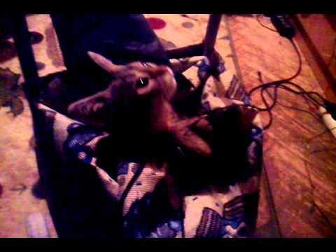Очень смешная кошка )))