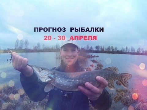 ютуб прогноз рыбалки