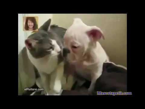 Mascotas graciosas haciendo muchas tonterias. Animales divertidos y graciosos en acción.