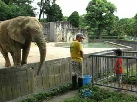 ゾウのえさやり体験 @東山動物園