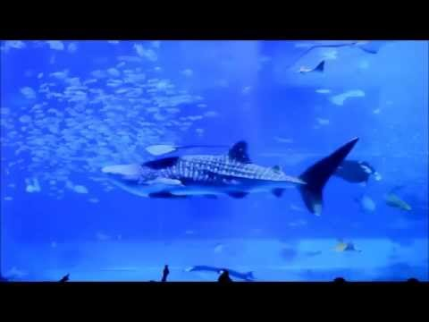 Nature News SE01E23; Aquariums have health benefits