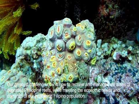 Philippine Reef Fish Biodiversity
