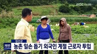 정선]농촌 일손 돕기 외국인 계절 근로자 투입