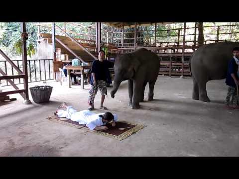 Тайланд Массаж делает слоненок
