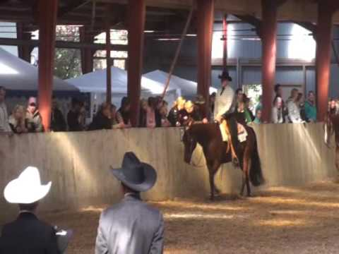AQHA DM 2009 - Senior Western pleasure - FOR SALE