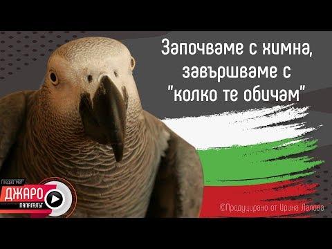 Папагалът Джаро -  започваме с химна, завършваме с колко те обичам