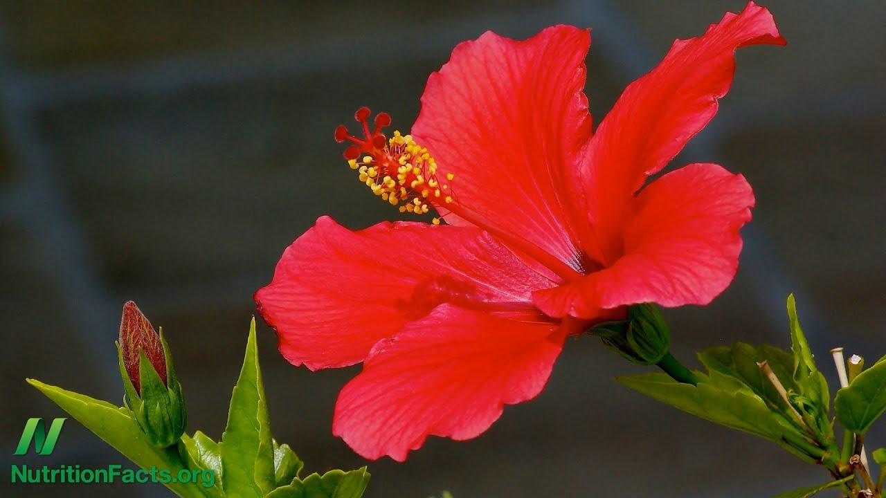 Herbal Tea Update: Hibiscus