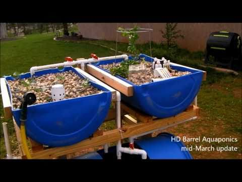 Hd Barrel Aquaponics Mid March Update Rain Lowered My