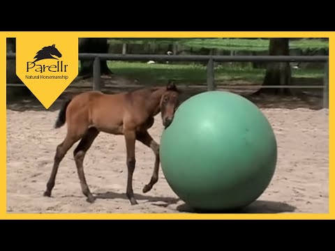 A Natural Start to Horse Training with Parelli Natural Horsemanship Music Videos