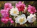 ХуДоЖнИкИ Картина маслом Красивые Цветы Букет Пионы Вугар Мамедов mp3
