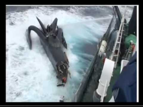 Sea Shepherd's Ady Gil attacked by Japanese Whaling Vessel