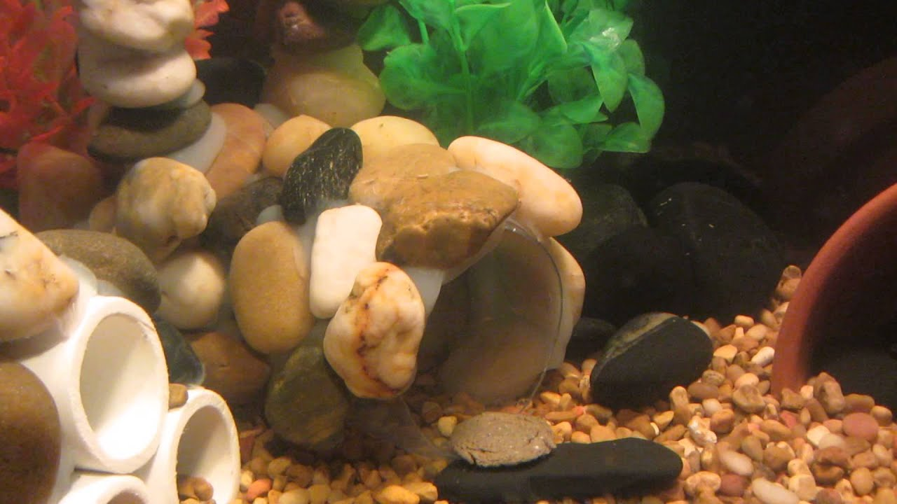 Грот в аквариум своими руками