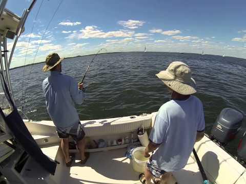 Bass Fishing Narragansett Bay Summer 2014
