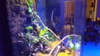 90 gallon vivarium for red eyed tree frog