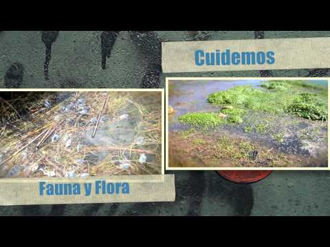 Cuidemos nuestro Lago Titicaca de la contaminación