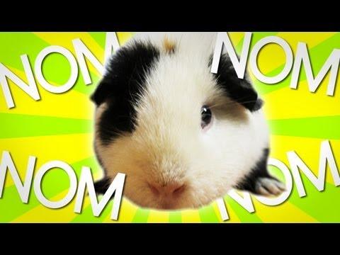 PANDA macht Nom Nom Nom Nom...