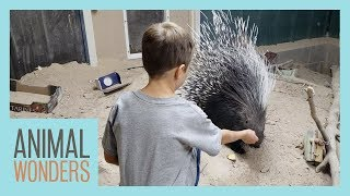 Are Exotic Animals Safe For Kids?
