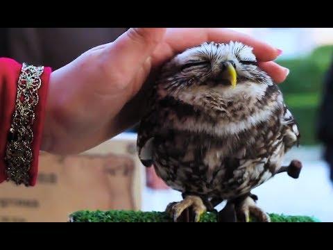 Süße und Lustige Tiervideos ( Teil 38) || ✪ Stern DuTube