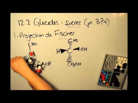 12.2a : Glucides : sucres