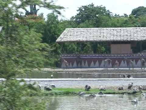 Bangkok-Safari world.mp4