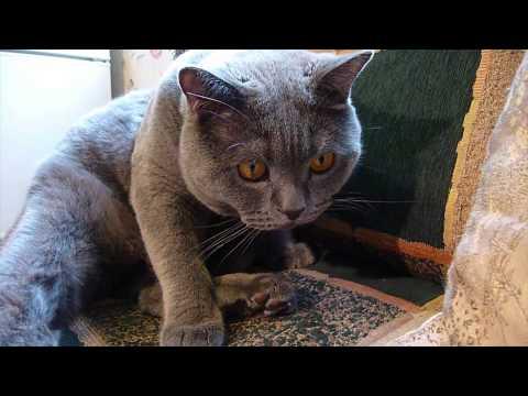 Zabawny Kot.  Zabawa Z Kotem - Polowanie Kota. Wesoły Kot. Część 2.
