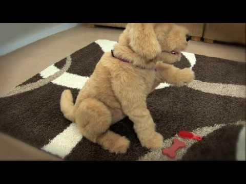 Furreal Friends Gogo Dog