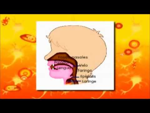 video educativo aparato respiratorio.wmv