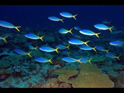 Marine Life of the UK Overseas Territories