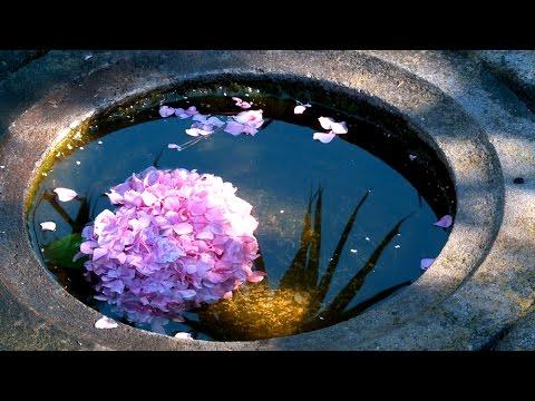 Zen Garden Flowers- Nature Sounds Only (No Music)